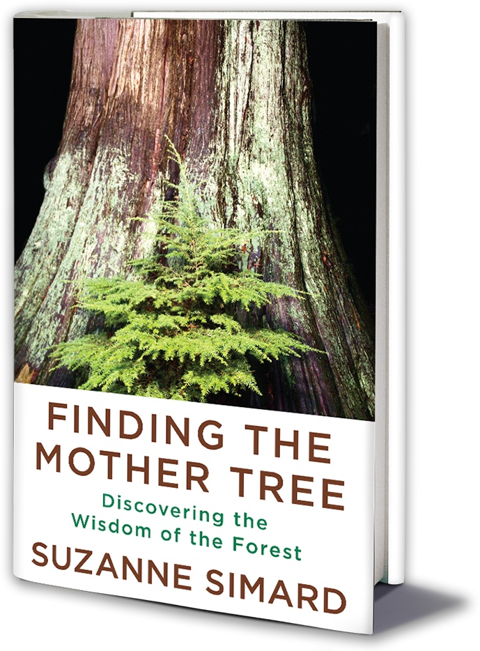 Cover of Finding the Mother Tree